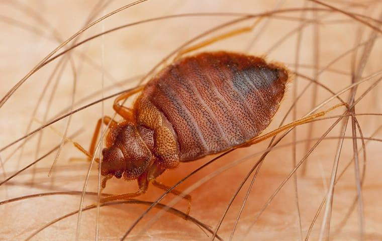 Bed Bug Control Professional Services For Northeast Dallas Metro