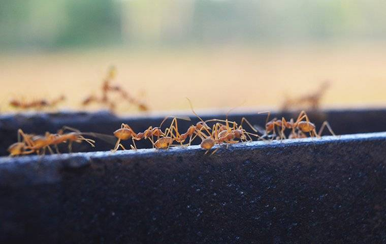 a group of fire ants crawling on a bench