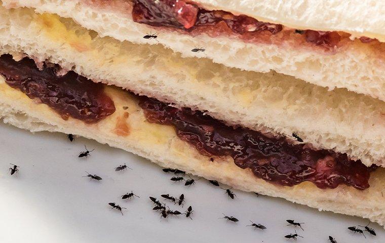 ants on a jelly sandwich