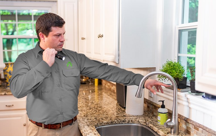 a pest expert inspecting a kitchen inside a home in hendersonville north carolina