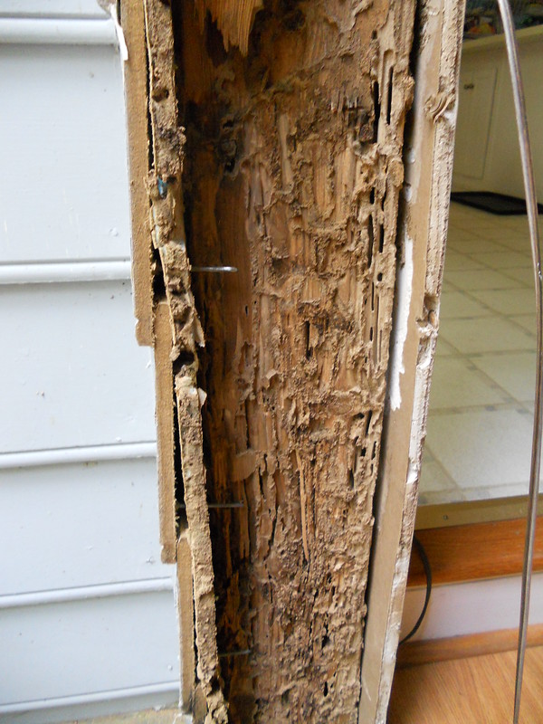 Termite damaged wall
