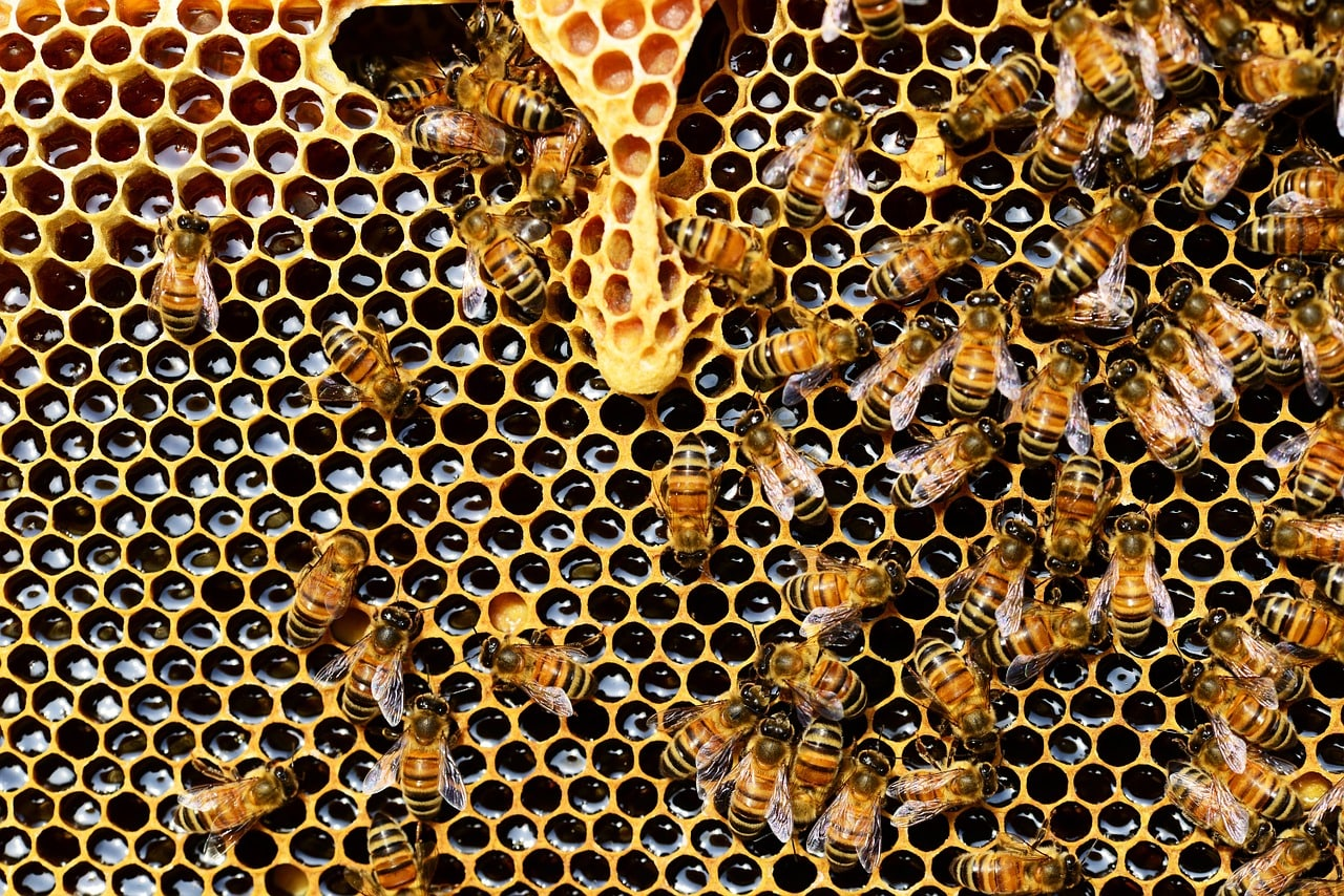 Beehive with bees working on it