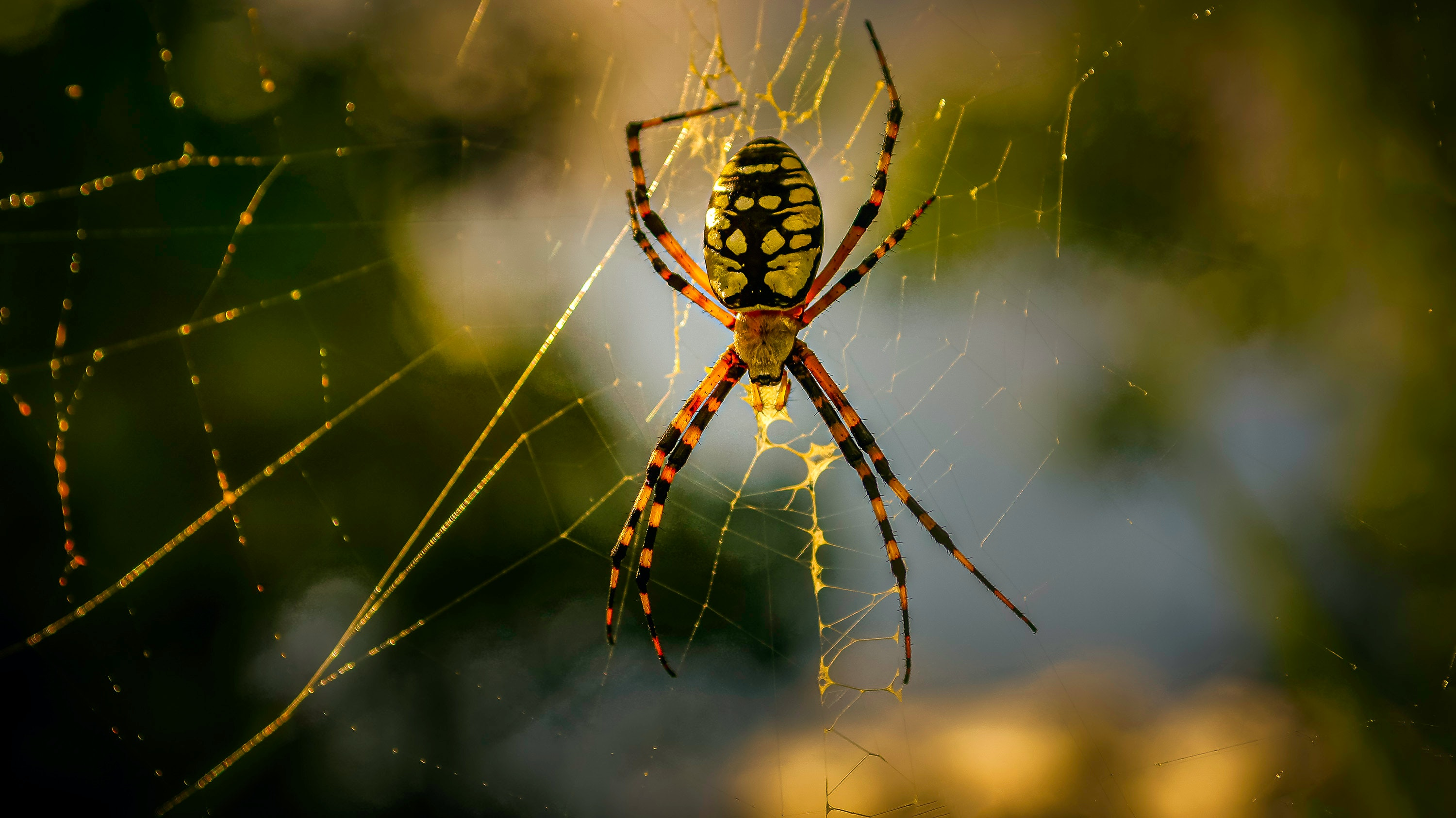 A spider waiting to trap prey in its web