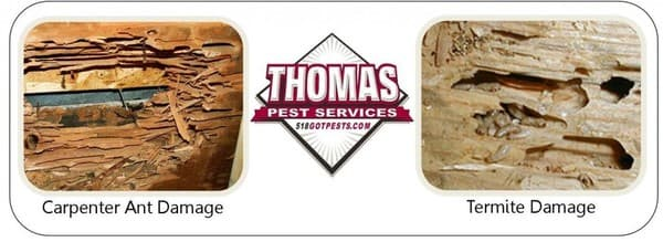 ant and termite damage comparison
