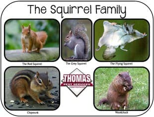 common squirrels found in new york