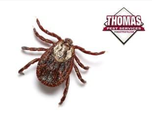 tick found in albany ny