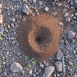 ant hill up close