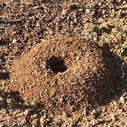 anthill up close