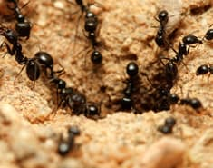 ants found outside of a home in new york