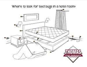 common bed bug hiding spots in hotel