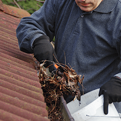 homeowner cleaning gutters