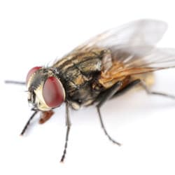 house fly in albany home