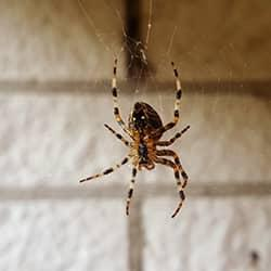 spider hanging from web