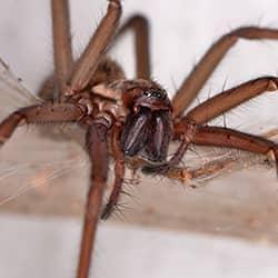 spider up close in schenectady home