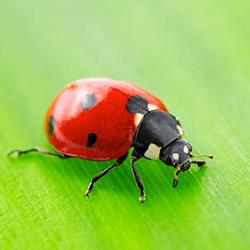 lady bug crawling on leaf