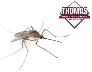 mosquito in albany ny