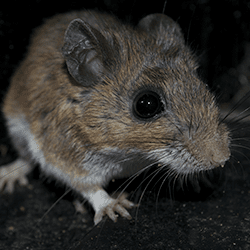mouse sneaking around basement