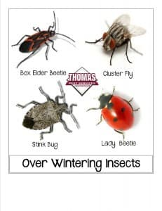 overwintering pests