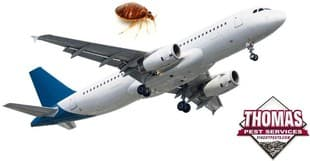 airplane and bugs