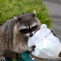 wildlife in trash can