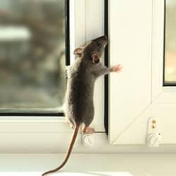 rodent on a window