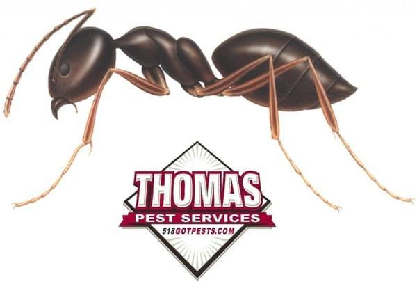 small ants in albany ny
