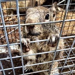 trapped squirrel