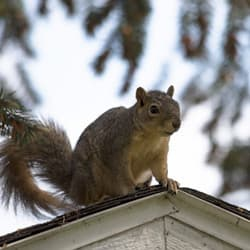 squirrel on albany home
