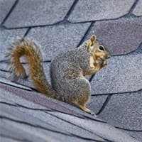 Squirrel Prevention In Your Home