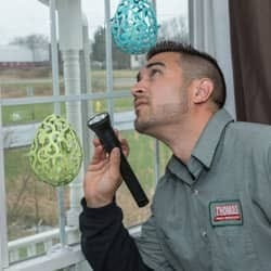 technician looking for pests in new york home