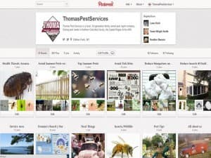 thomas pest services on pinterest