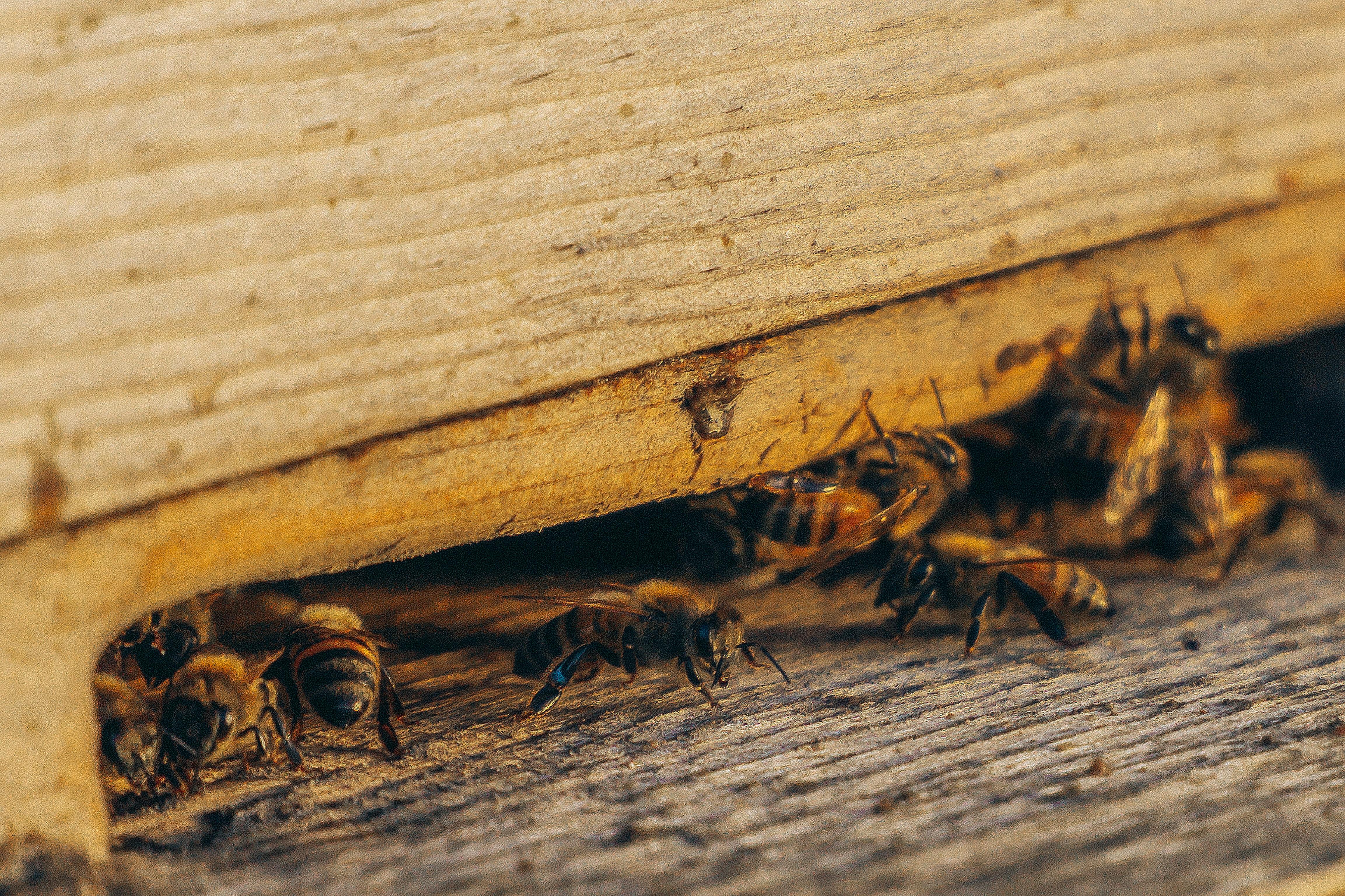 Bees crawling underneath a door