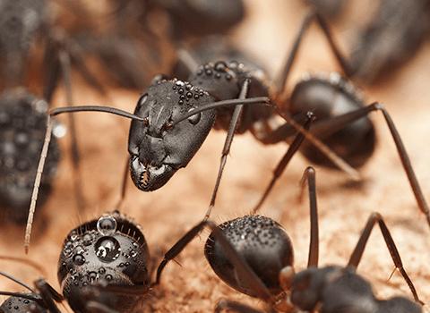 carpenter ants in new york home
