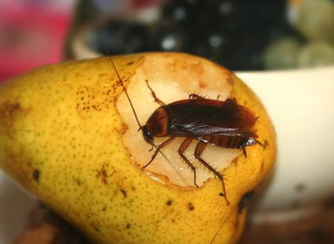 cockroach found in albany home