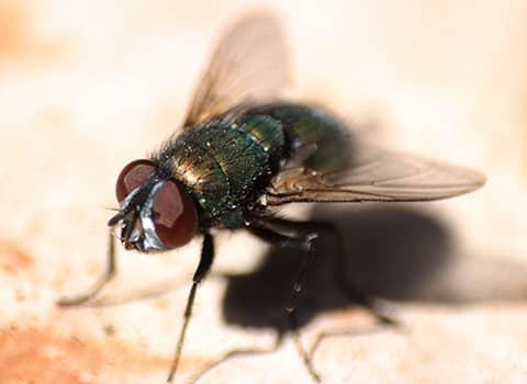 fly up close