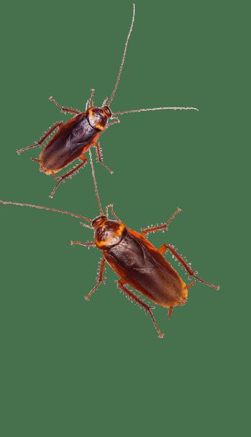 roaches in ny