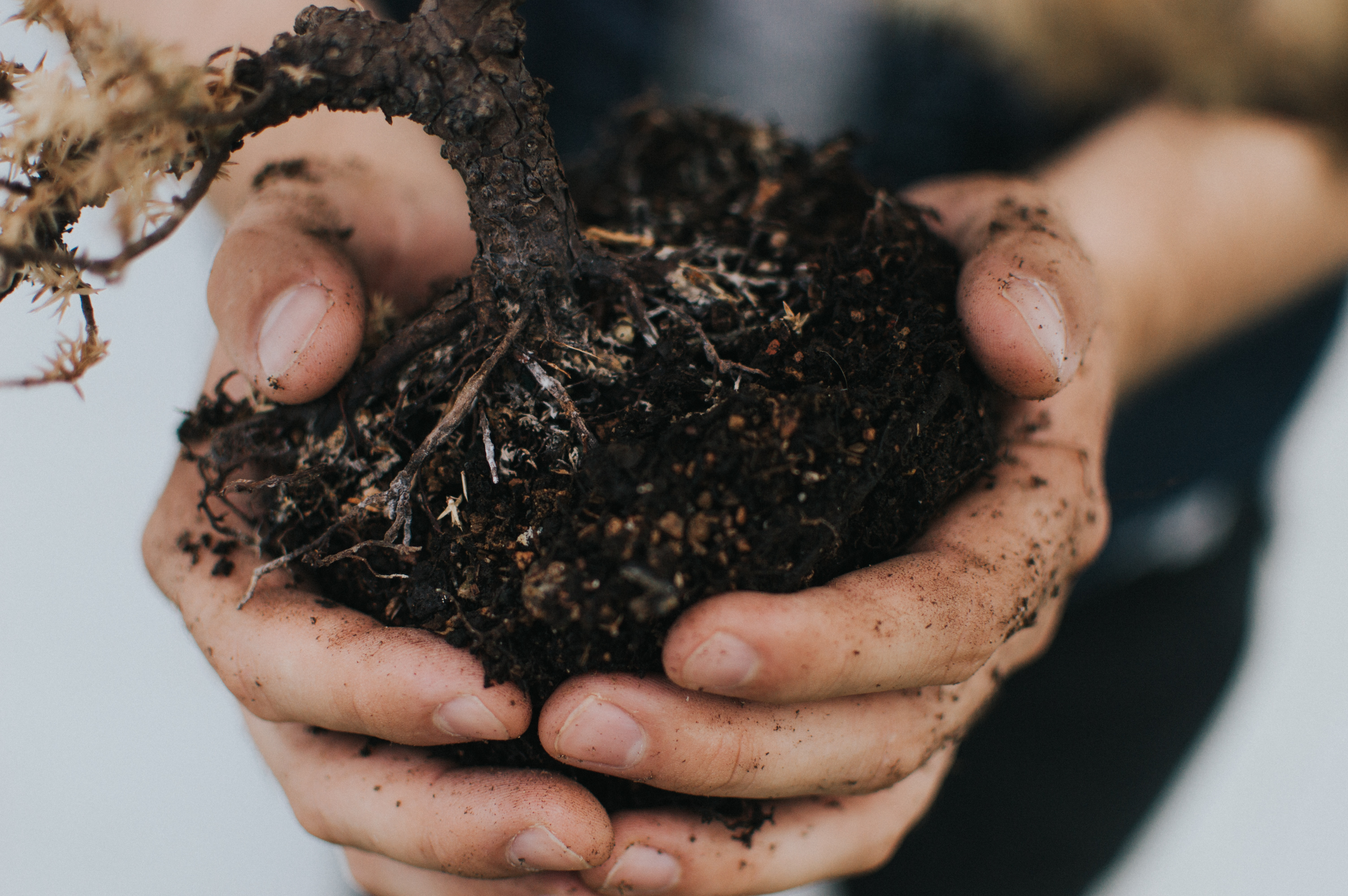 Holding soil in hands gardening