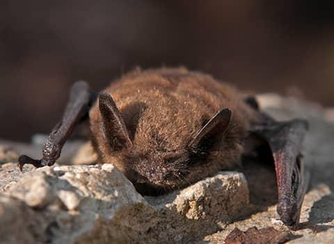 bat up close in new york
