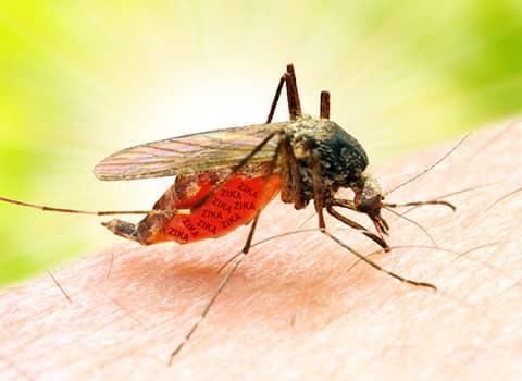 mosquito biting glens falls resident
