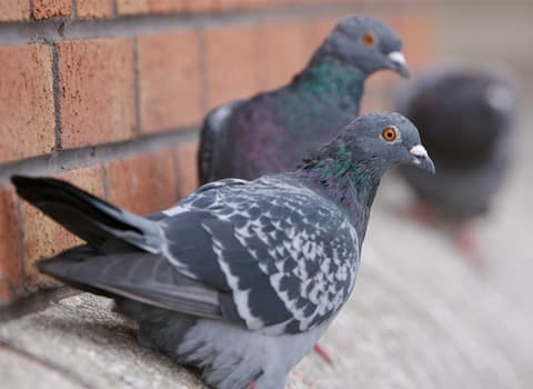 pigeons on a ledge
