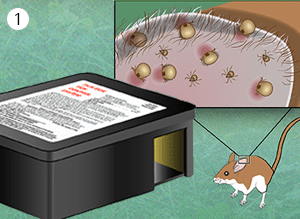 illustration of mouse discovering tick box