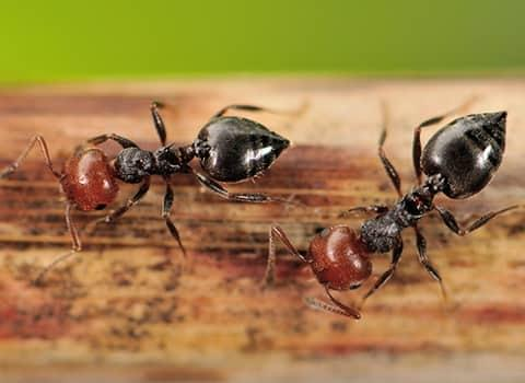 ants on a piece of wood