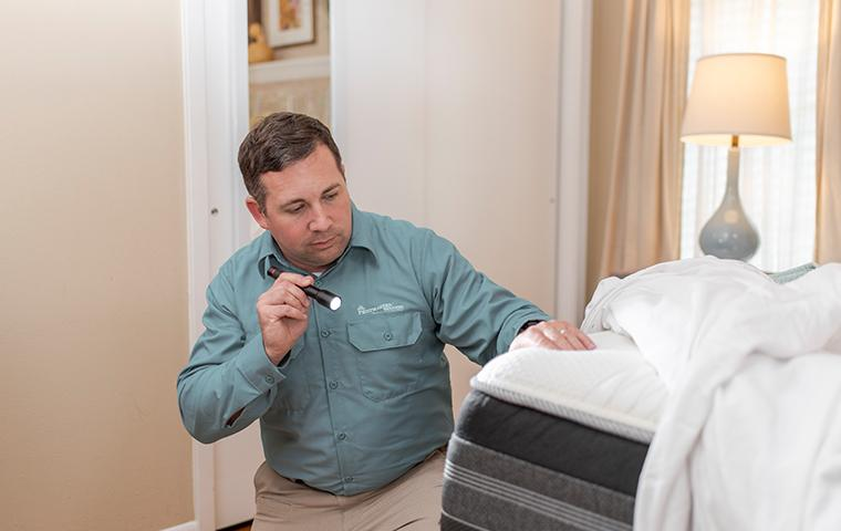 a pest management professional inspecting a mattress for bed bugs