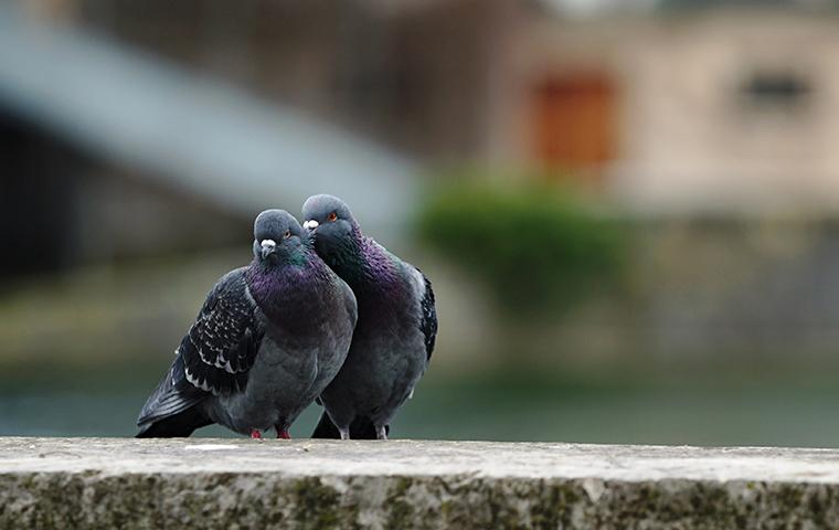 two pigeons on the ground outside of a home