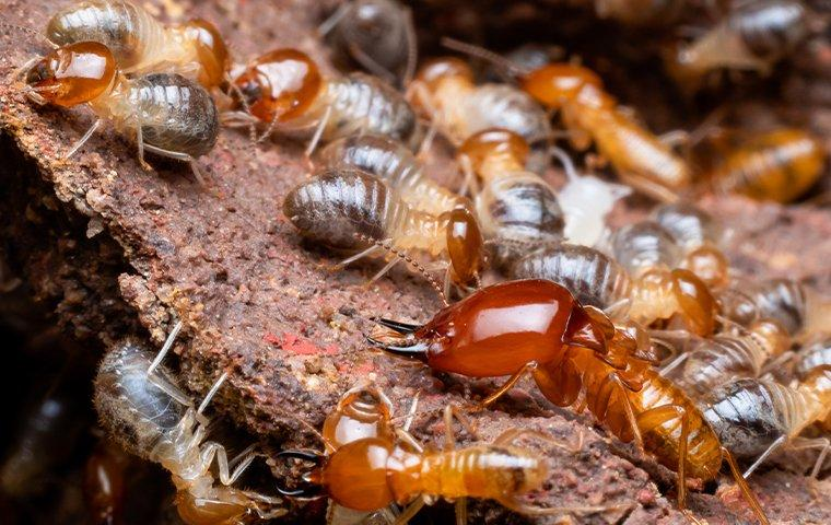 a large group of termites on wood