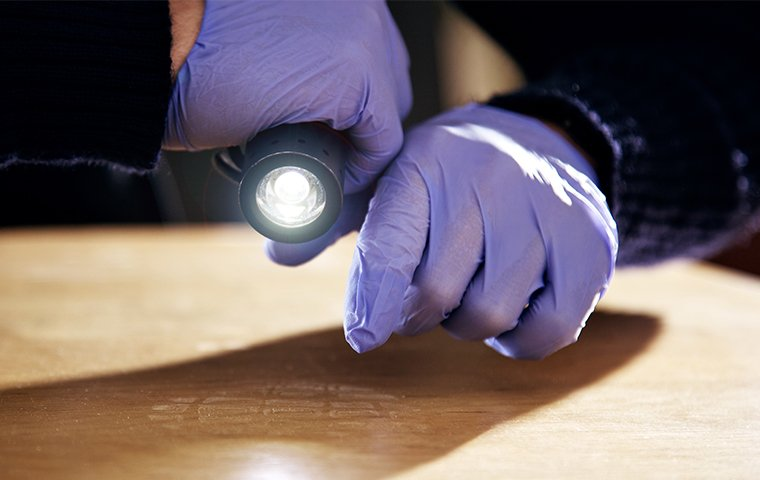 a tech with a flashlight in gloved hands inspecting