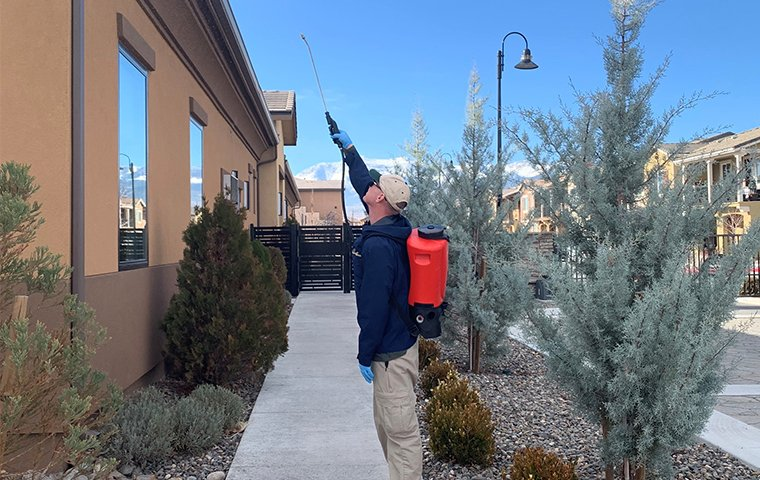 a pest expert treating exterior of house for pests