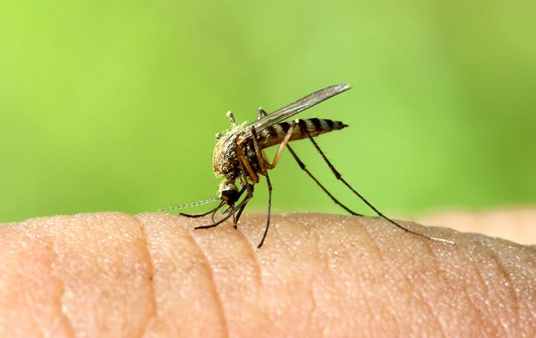 a mosquito biting a persons finger