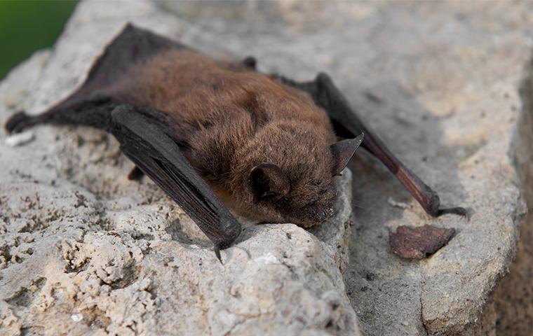 a bat resting on a stone wall outside of a home