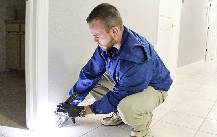 technician checking for signs of termite activity in an elizabeth city nc home